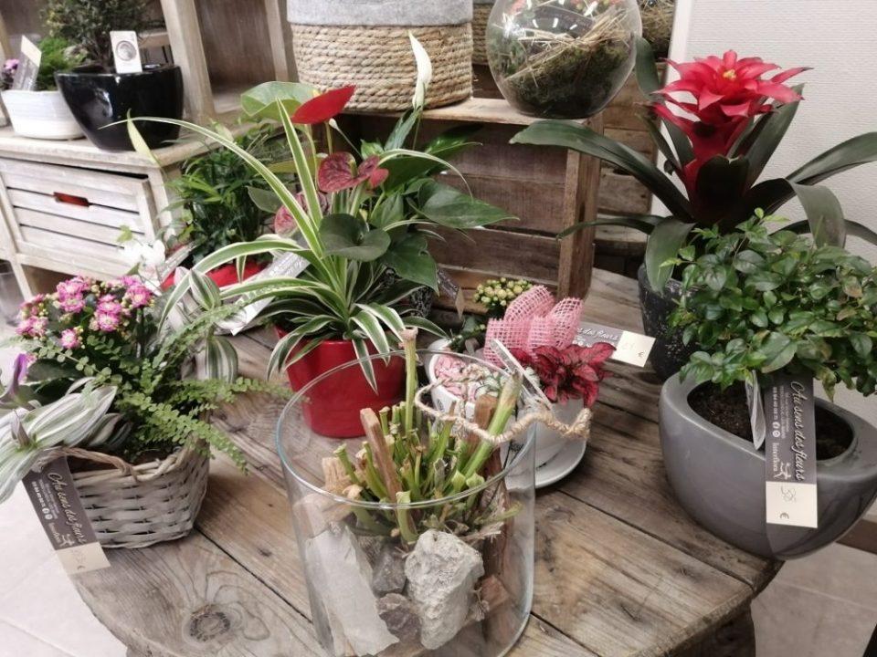 fleuriste au sens des fleurs luxeuil (8)